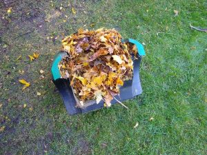 Mulched Leaves in my Qualcast Rotary Mower collection box