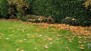 Von Haus 3 in 1 Leaf Blower, Vacuum and Mulcher Review 8