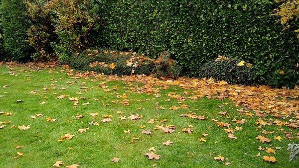 Laurel hede and assorted bushes