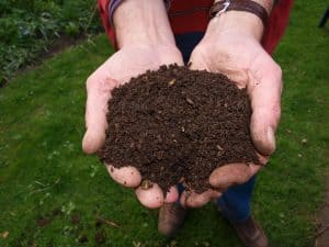 Cupped hands full of home made compost