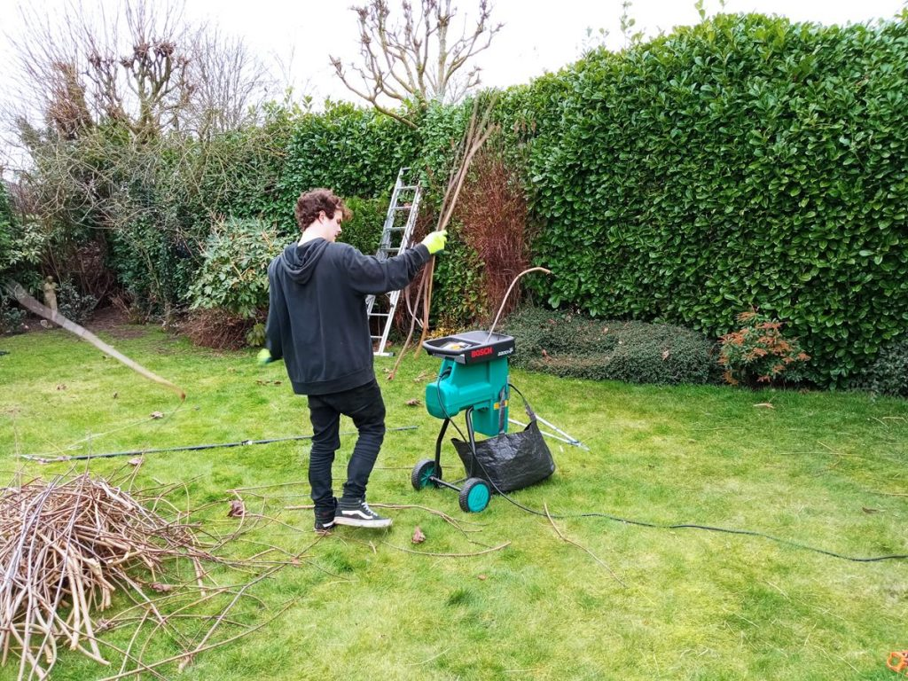 12 year old Bosch Shredder shredding maple cuttings
